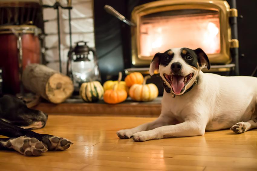 Thanksgiving and pets: Holiday do's and don'ts
