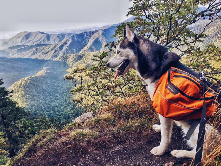 Dog sitting on mountain hike with pet parent