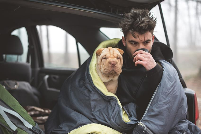Dog and man camping from car