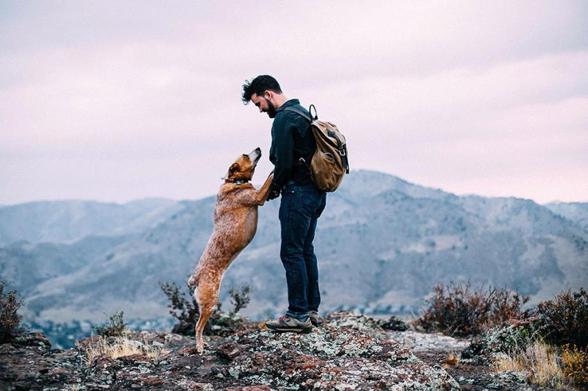 Dog and person hiking in the mountains
