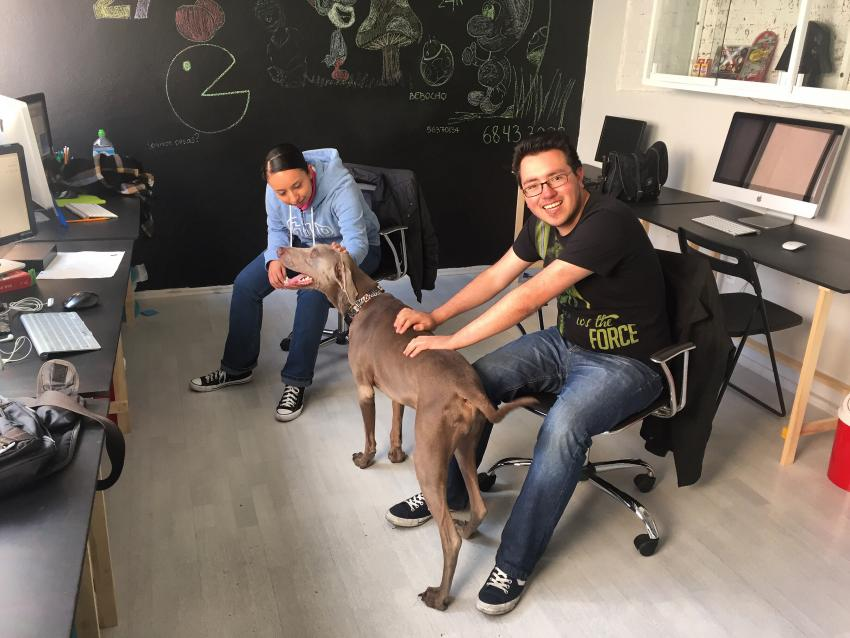 Dogs in office with workers