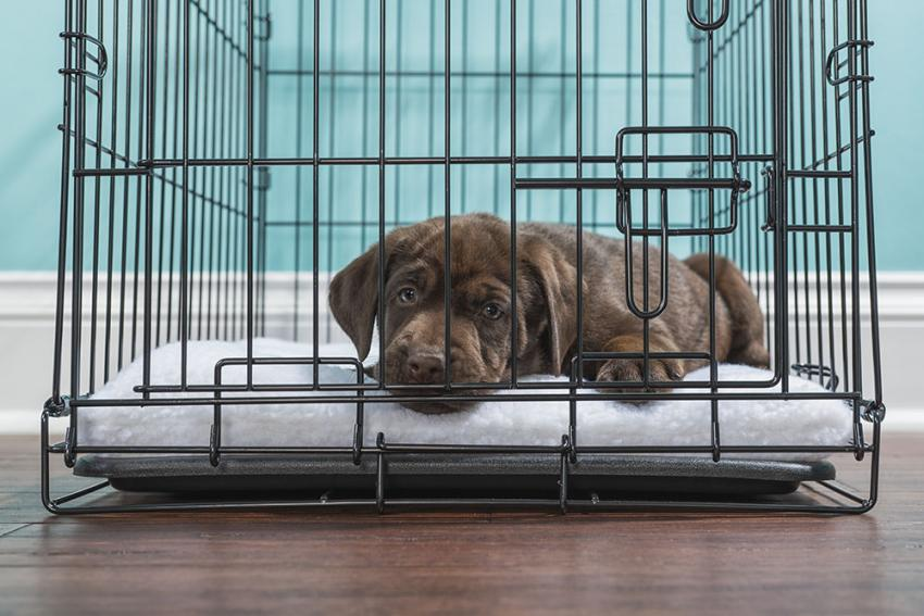 Puppy in a crate laying down
