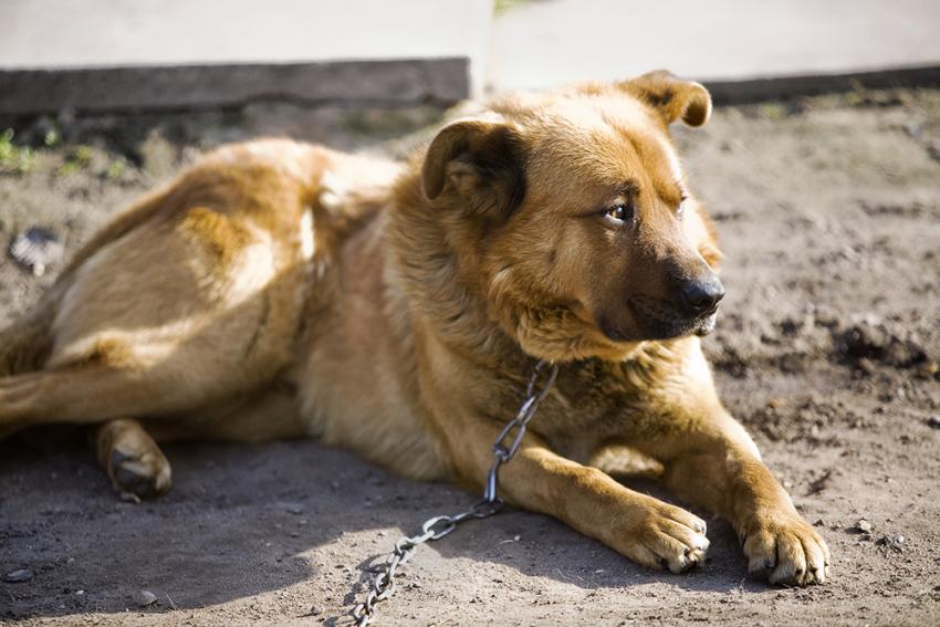 Sad dog left behind chained by owner