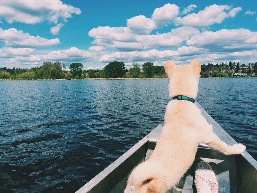 dog sailing on a boat in a lake