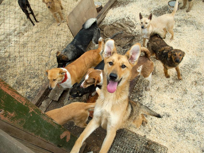 Several puppies in an overcrowded pen