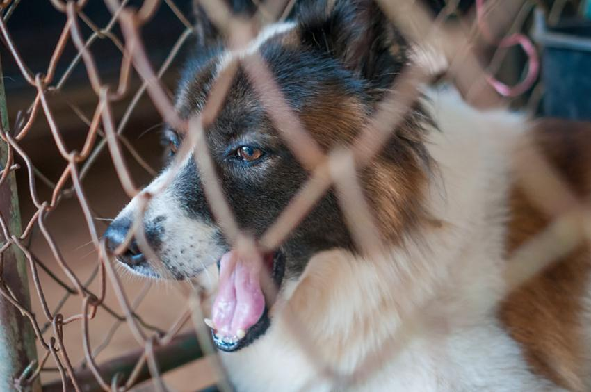 Dog in a kennel coughing blog