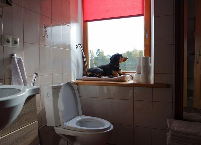 Small dog sitting in window of bathroom