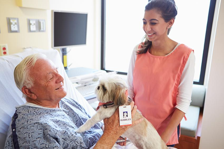 Therapy dog visiting patient in the hospital