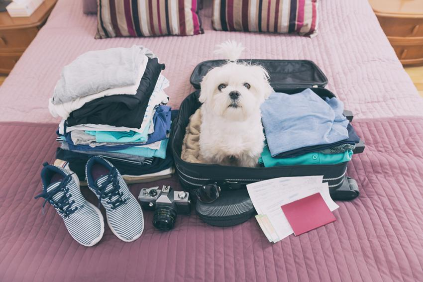 Dog sitting on a half packed suitcase