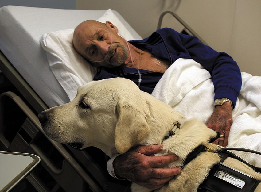 Therapy dogs and their impact on human health | Therapy dog visiting a sick man in the hospital