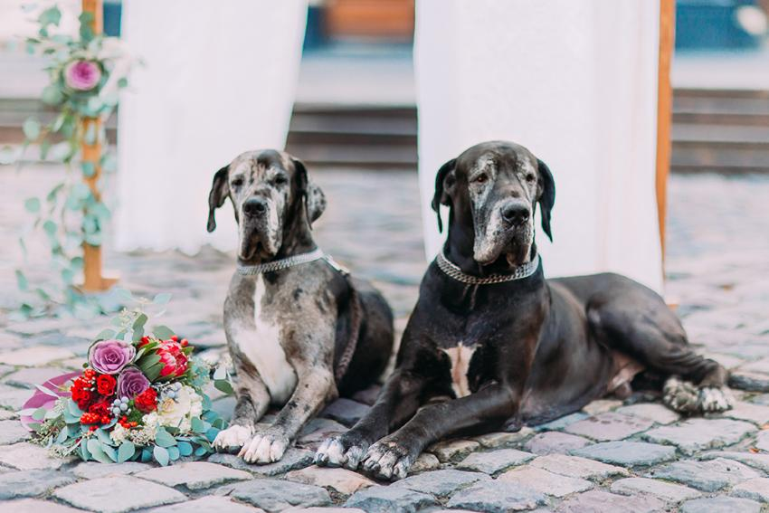 Two large dogs next to flowers