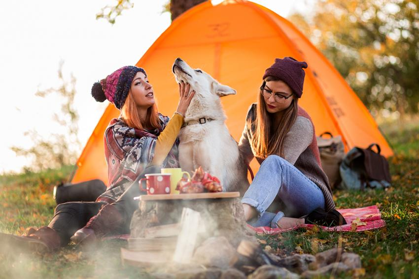 Two women camping with dog in autumn