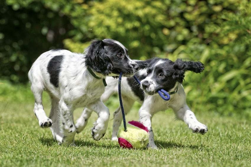 two young puppies playing in yard