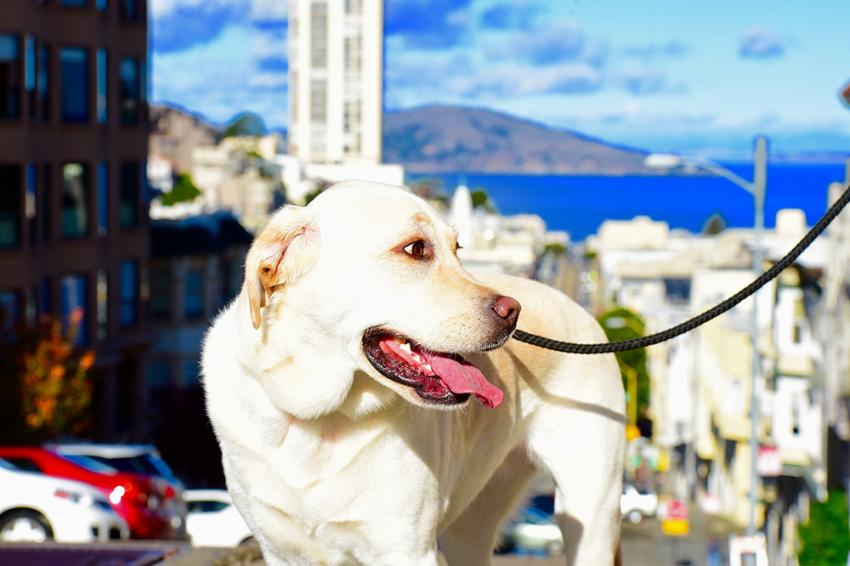 Five California Sites To Visit With Your Dog | Figo Pet Insurance
