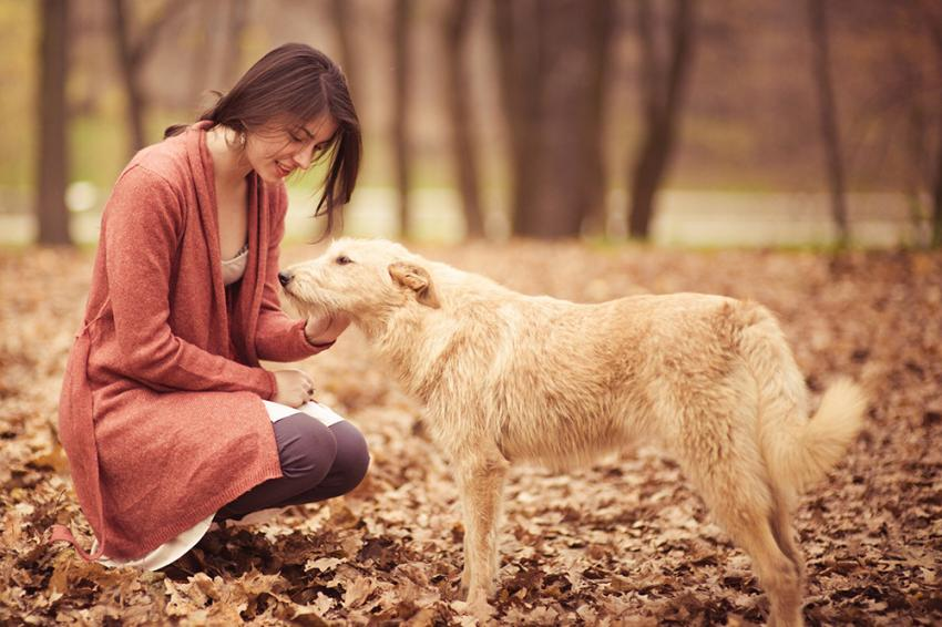 Fall pet travel ideas: Woman petting dog on fall leaves in dog park