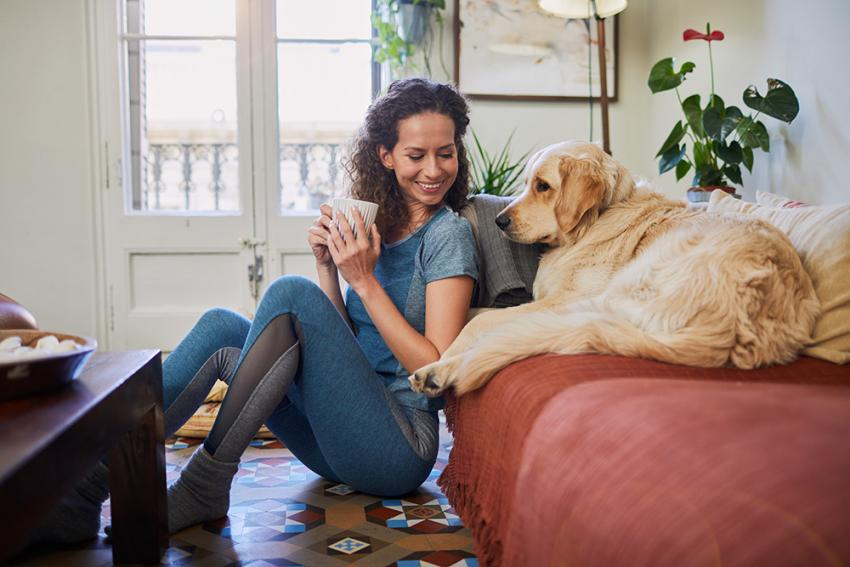 Dog on a couch next to girl