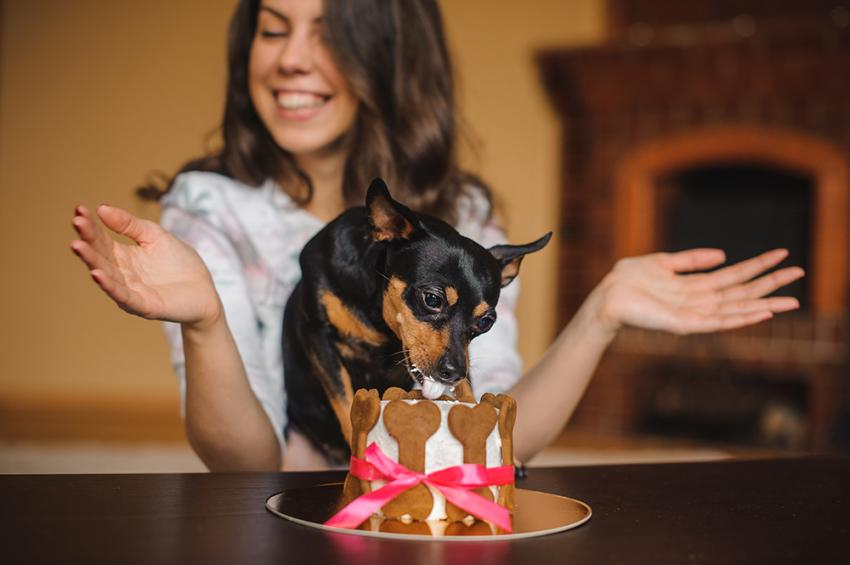 Woman watching small dog enjoy puppy cake