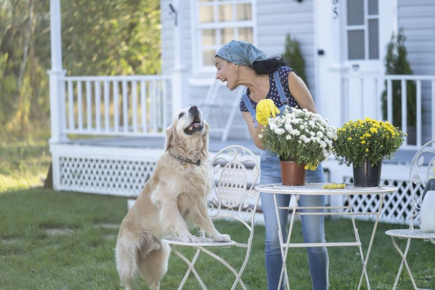Woman with a dog while planting flowers