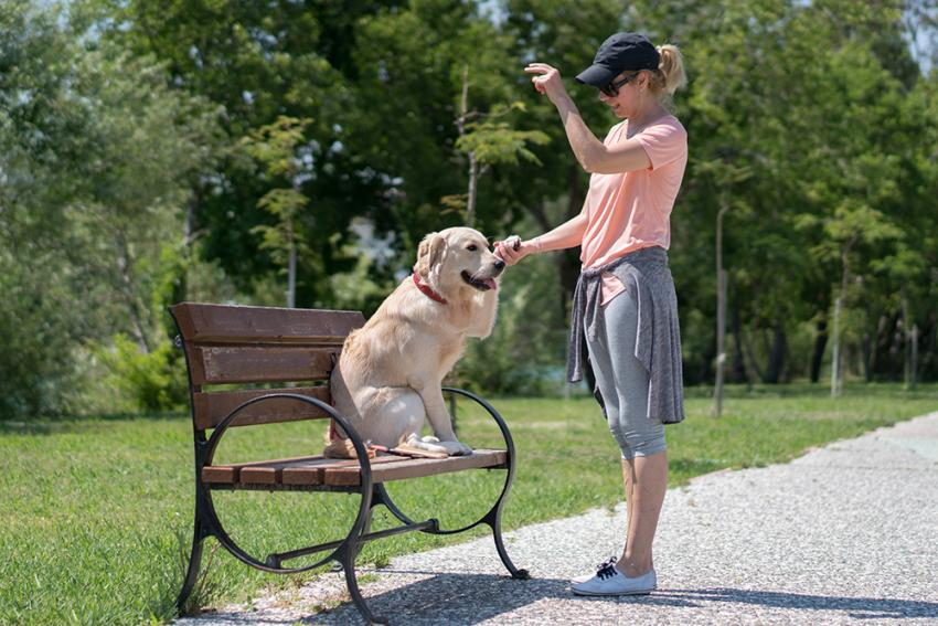 Woman and dog training on a bench