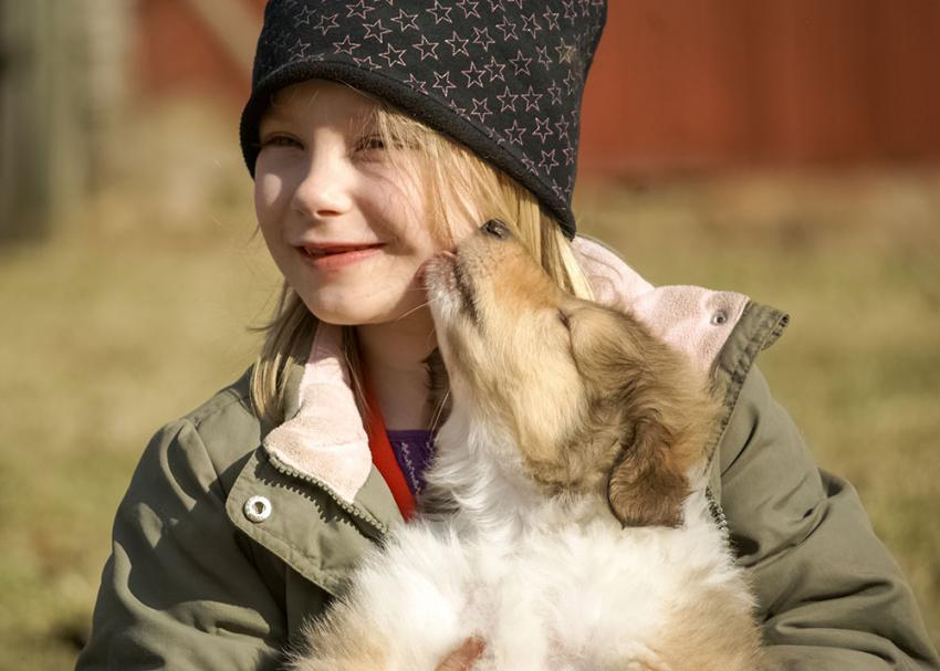 Young girl holding a collie