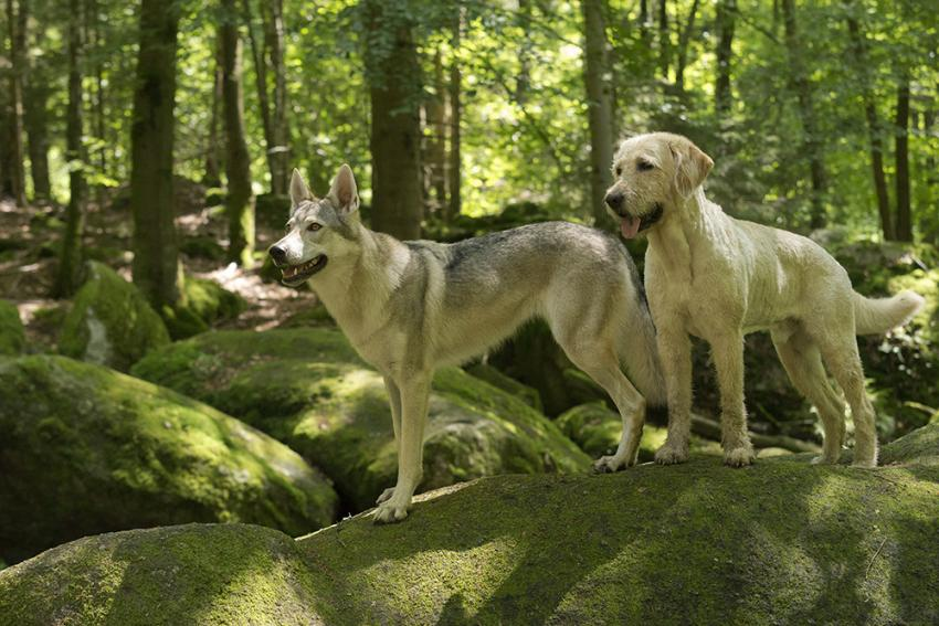 two dogs enjoying green nature