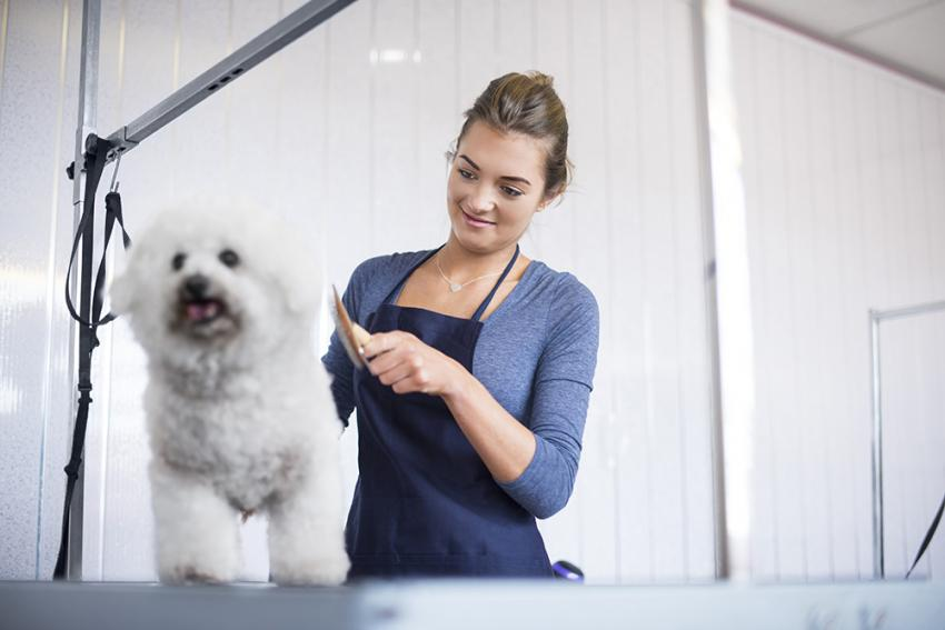 Woman grooming small white dog