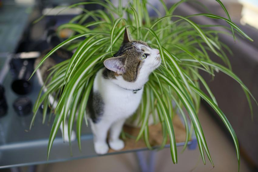 Cat investigating a house plant
