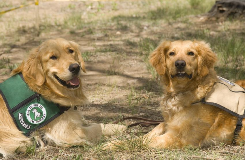 Two therapy dogs laying on the grass