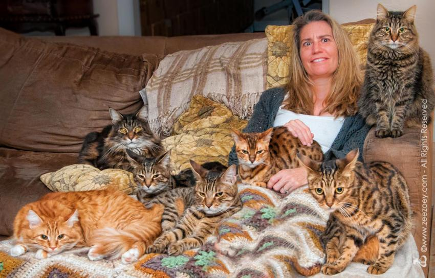 Woman with a lot of cats