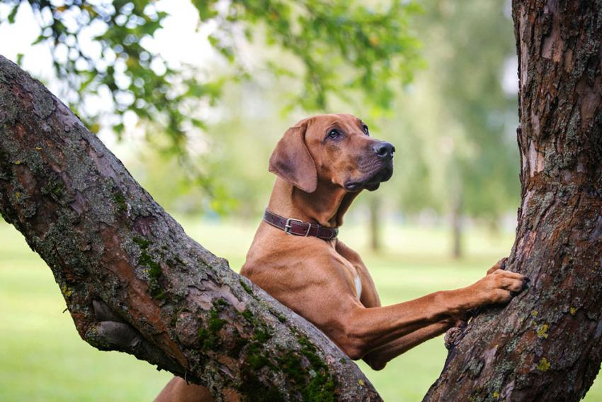 Dog searching for bugs in tree