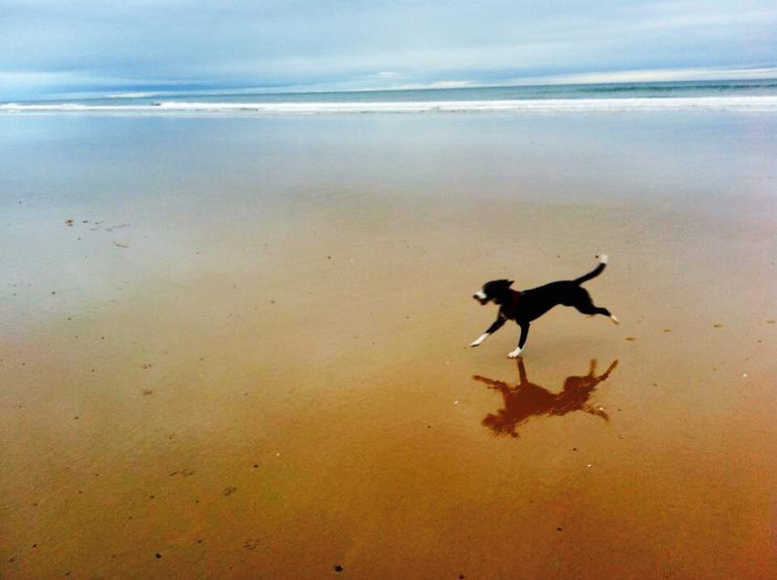 Active dog running free on the beach