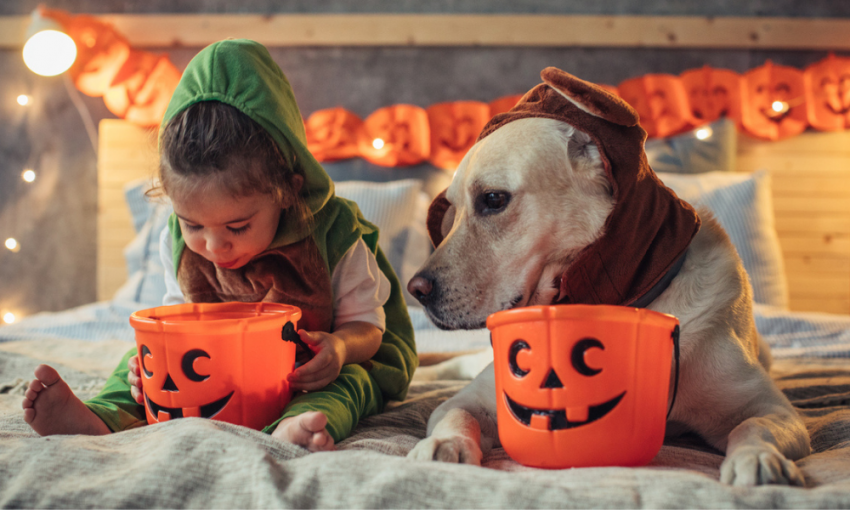Dog and child dressed for Halloween up on bed