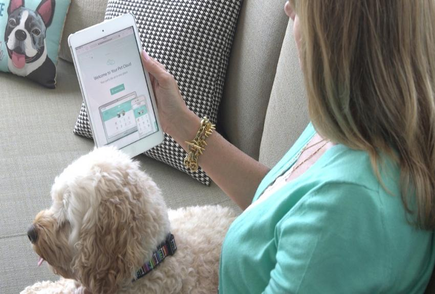 woman with dog looking at tablet
