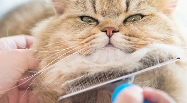 combing can help reduce hairballs in cats
