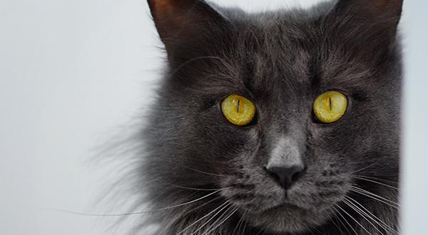Beautiful grey fluffy cat sitting