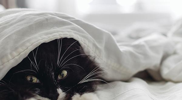 Black and white cat laying on bed peeking out from under white sheets