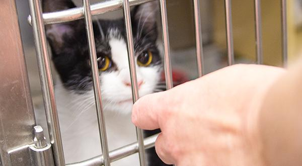 Cat in cage being fed by animal shelter volunteer