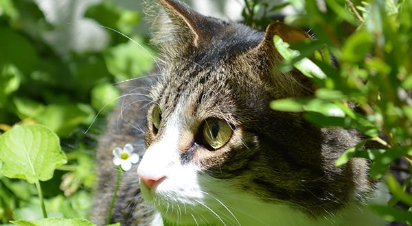 Garden plants surround an outdoor cat