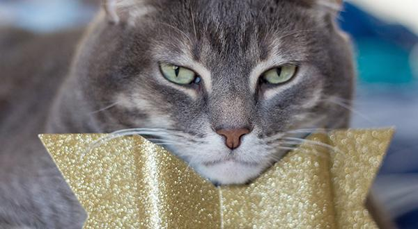 Drama Cats: Kitties That Should Receive An Oscar For Their Performances | Figo Pet Insurance