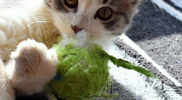 Cat playing with a green toy