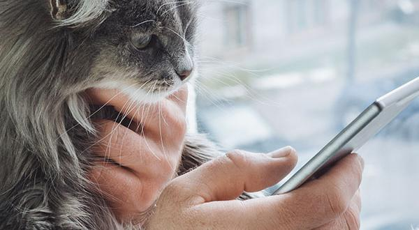 Man holding sick cat while chatting with veterinarian on mobile phone