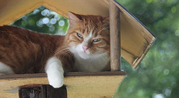 Orange cat in tree house