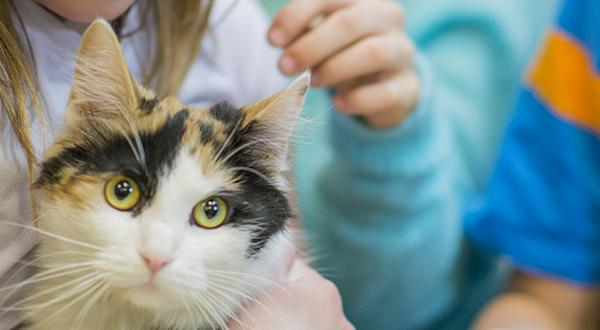 June Is Adopt-A-Shelter-Cat Month | Figo Pet Insurance