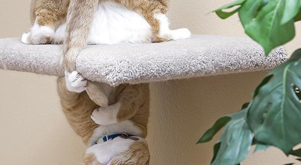 Cat-astrophe: Felines Who Found Themselves in Tricky Situations | Figo Pet Insurance
