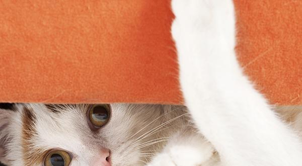 Cat peering underneath orange panel
