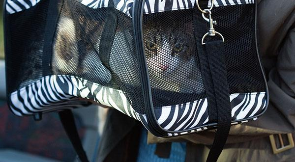 Cat traveling with a bag