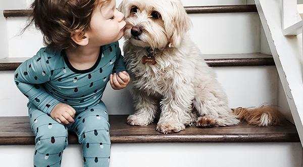 Puppy with a kid on the staircase