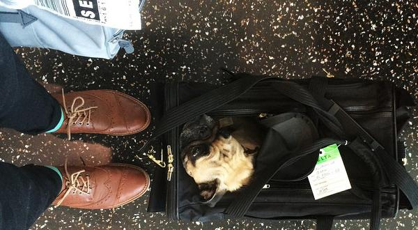 Small dog sitting in pet carrier at airport