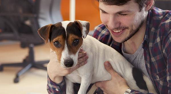 Dog on lap of man at desk in pet-friendly office