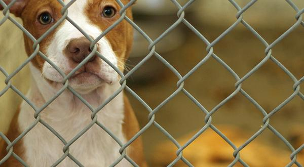 Dog waiting to be adopted in animal shelter